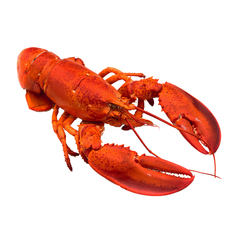 Cooked Frozen Whole Lobster (350g)
