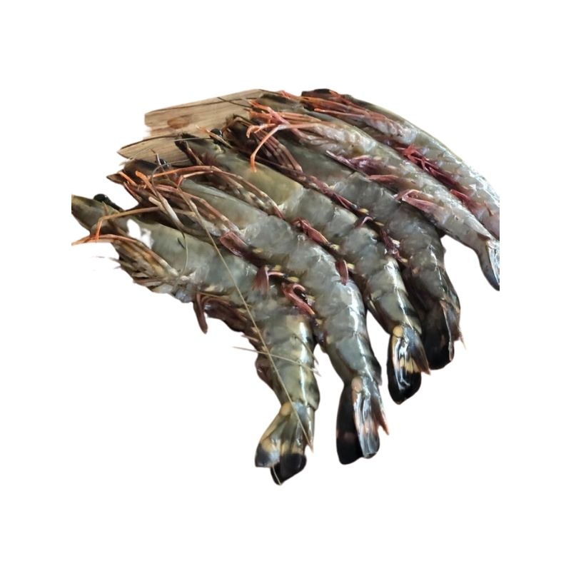 Tiger Prawn Raw Head On (8-12)